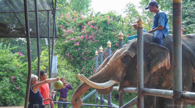 08 Elephant Village