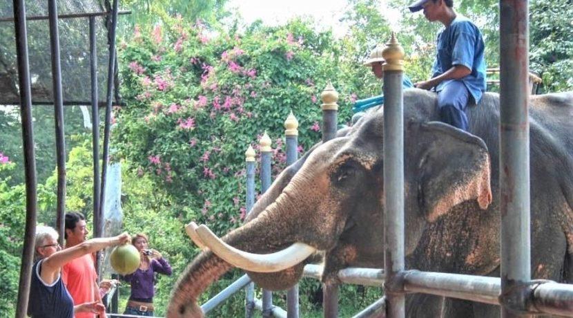 98 Elephant Village